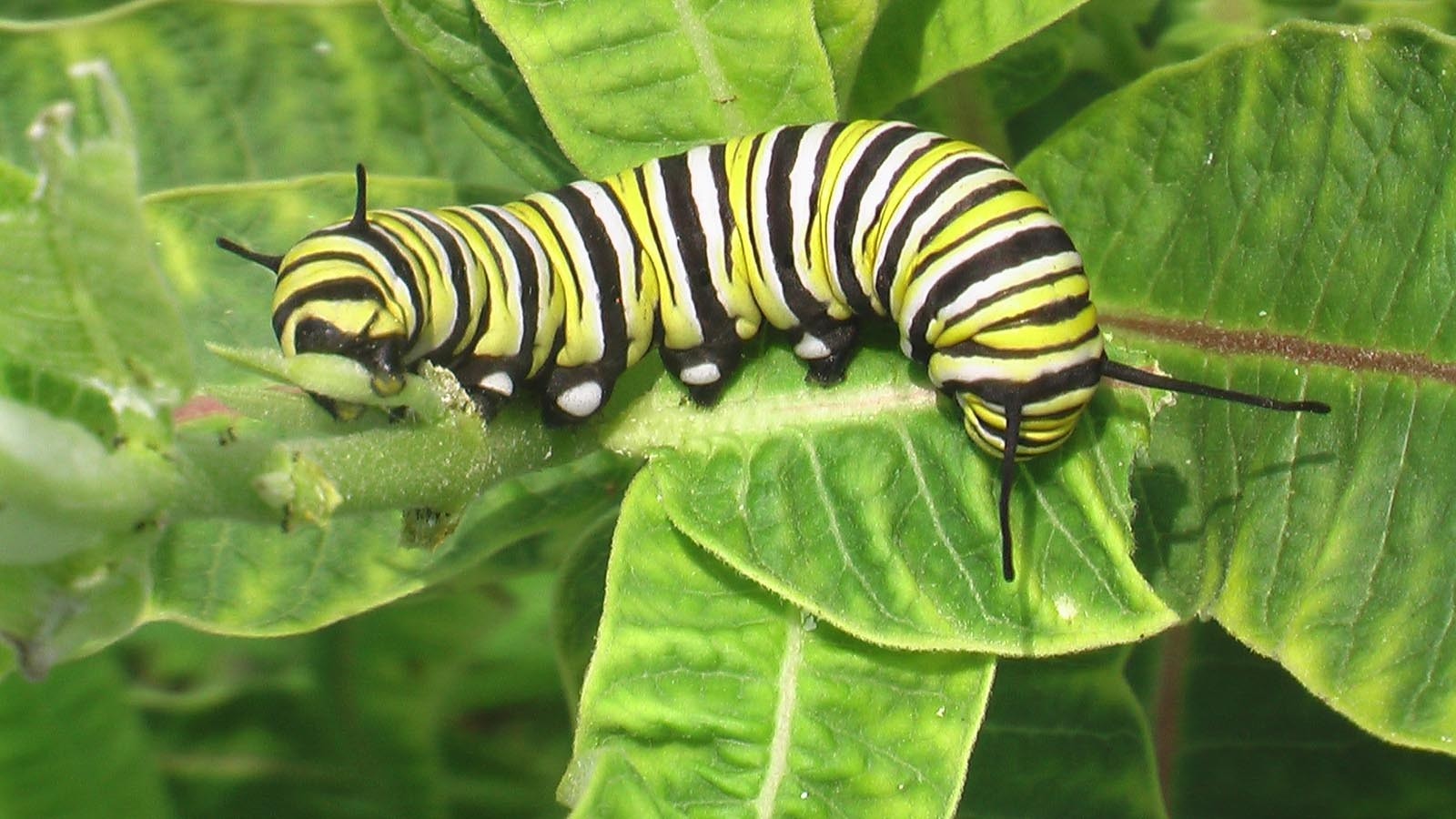 How a caterpillar saved my marriage